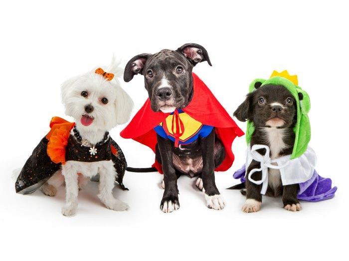 Los perros mejor disfrazados